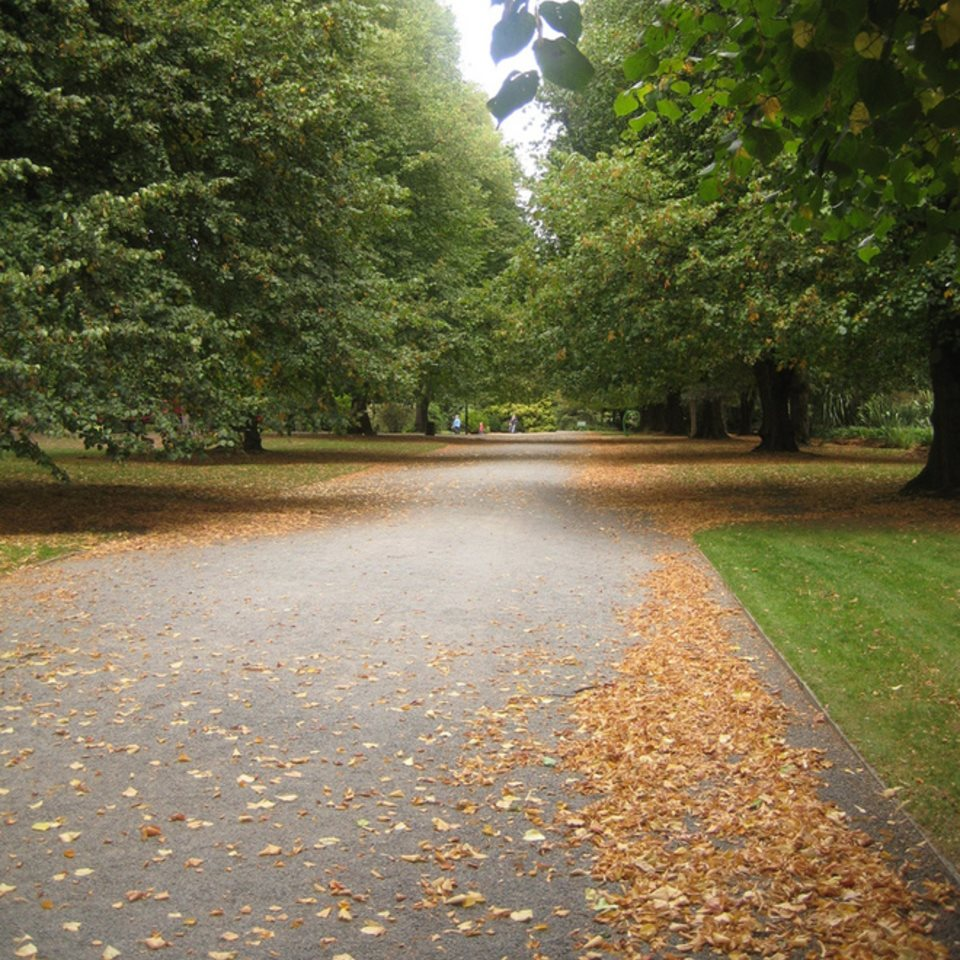 Should Cycling be allowed in the Botanic Gardens?